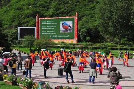 草地乡白马藏族同胞带来的具有浓郁民族风情的熊猫舞、舞、打